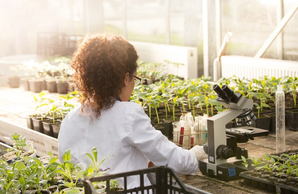 Female scientist studying plant growth