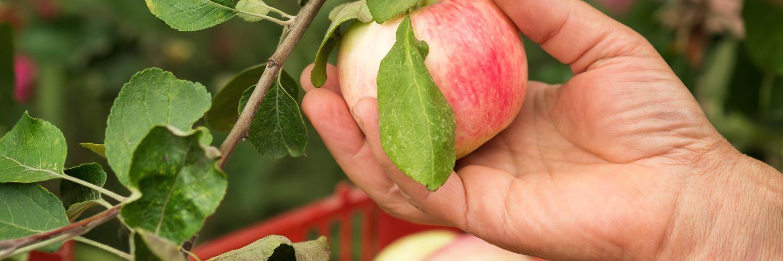 5 tips to find Australia's best farm jobs - AustralianFarmers