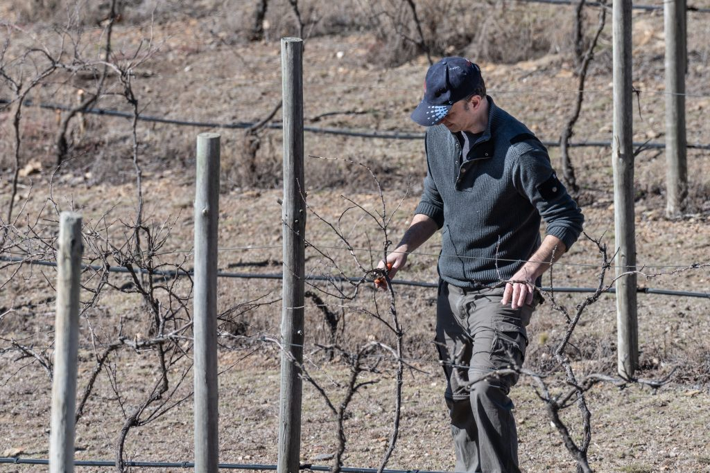 Agricultural work in South Australia: pruning grape vines